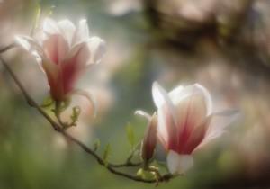 FloreslindasdelicadasflowersFiori