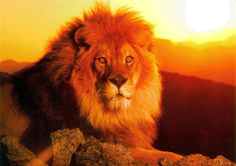 """O """"leão"""" de Lyon"""