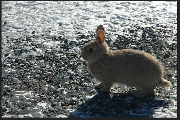 A corrida dos coelhos