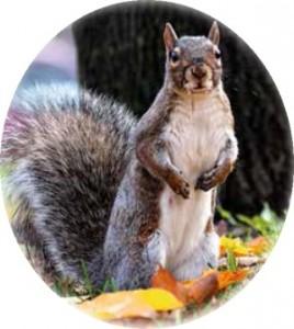 Fazer um esquilo?