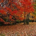 outono-i