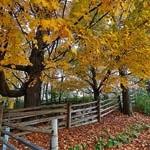 outono-iii