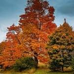 outono-iv
