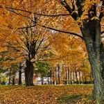 outono-vi