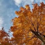 outono-viii
