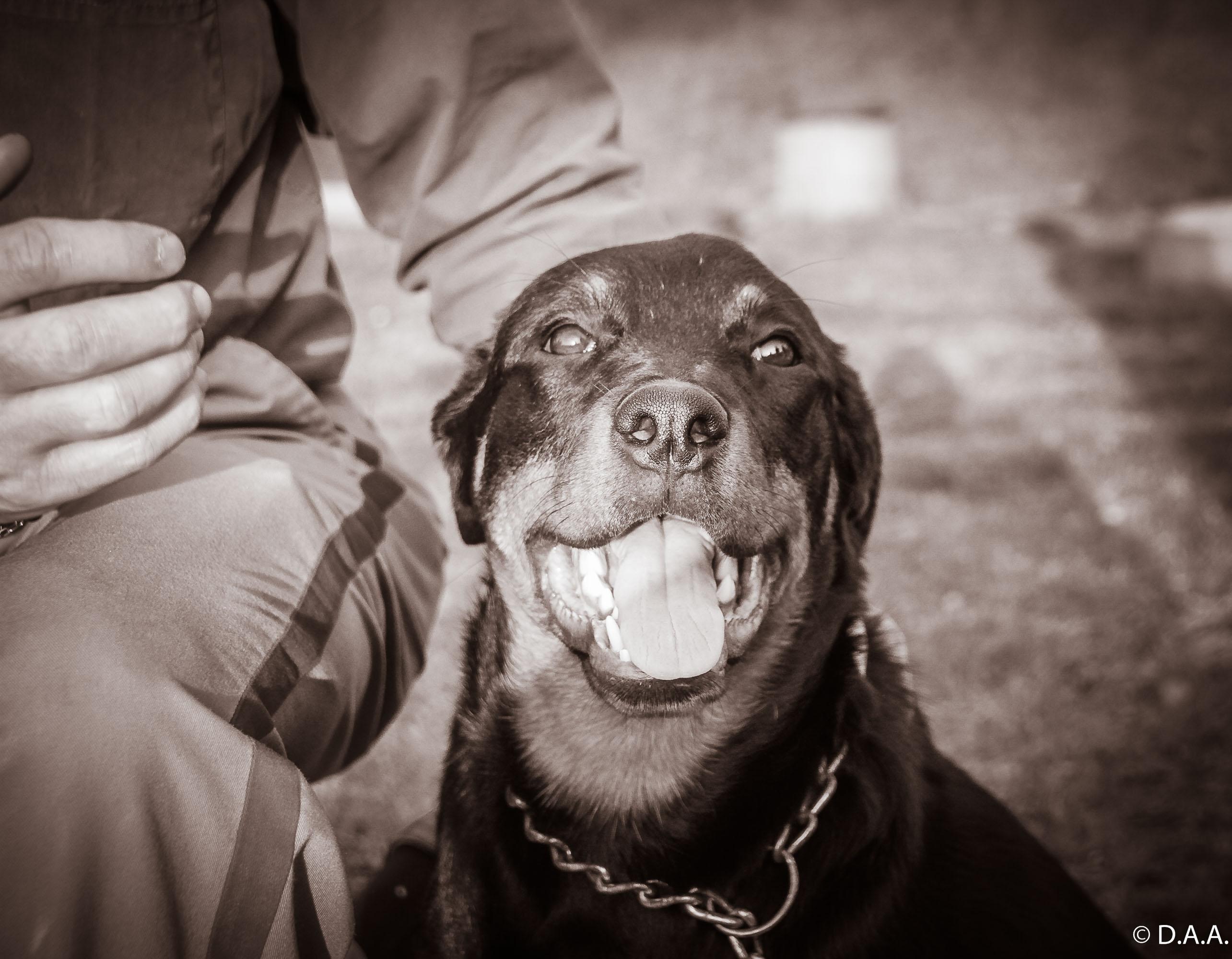 Os cães que tinham fé.