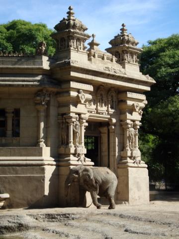 Heraldos del Evangelio - Paseo al Zoo
