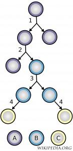 STEM CELL copy
