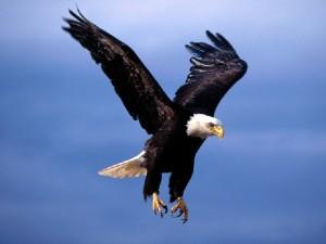 Aquila non capit muscas