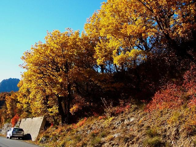 ArvoresOutono_Frace_Franca_Grand Canyon du VerdonMundovegetalplantas