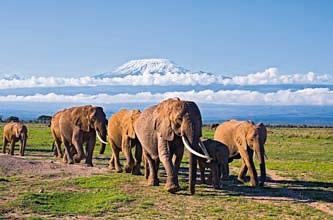 kilimanjaro-com-elefates