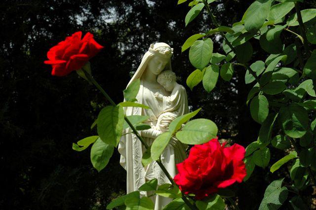 Nossa Senhora e a rosa