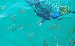 Em plena armonia com a fauna marinha