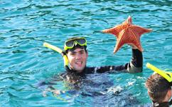 Uma bela Estrela do Mar