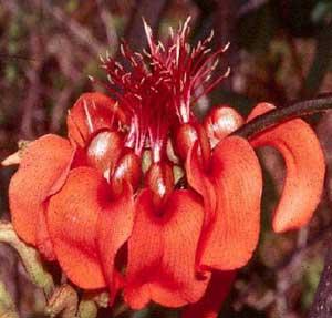 vegetação e sistemática botânica
