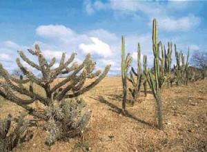 árvores baixas e arbustos que, em geral, perdem as folhas na estação das secas