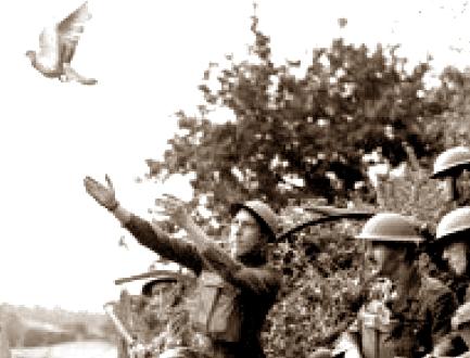 pombo-correio-na-guerra-si