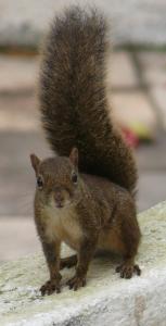 esquilo1