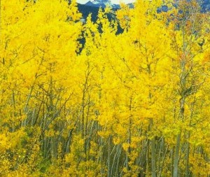 """A Floresta de Ouro"""