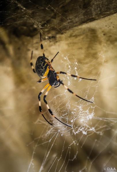 O demônio quando nos tenta, age à maneira de uma aranha em busca de sua presa