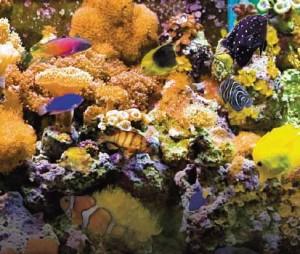 Aquario Arautos