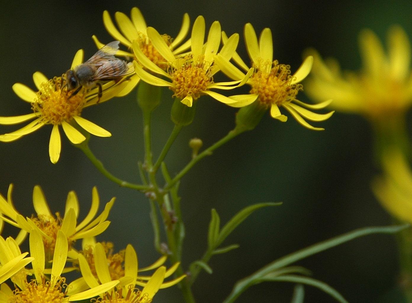 As abelhas são símbolos de Cristo que nos dão o doce mel graça e a cera que produz a luz, tal como a fé